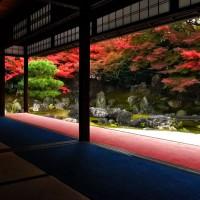 圓徳院の紅葉