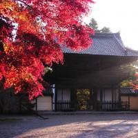 神護寺山門と紅葉