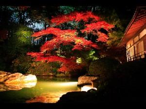 庭園の龍心池と小御所