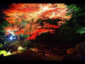 枯山水庭園のライトアップ